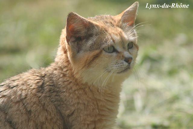 Photos du Parc des Félins par lynx-du-Rhone visite 2007 Img_5410