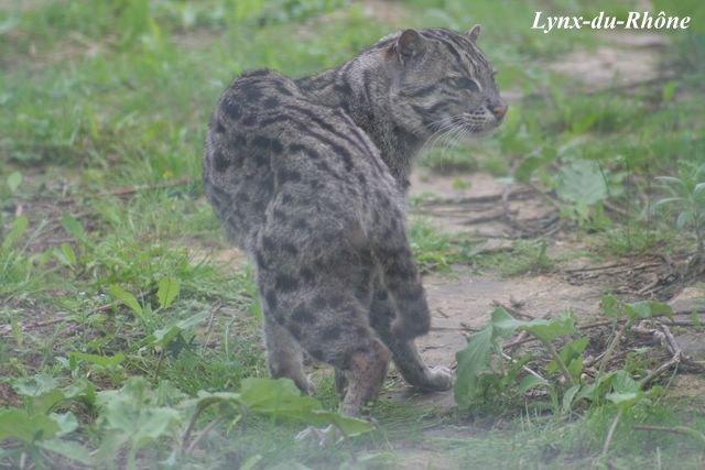 Photos du Parc des Félins par lynx-du-Rhone visite 2007 Img_5512