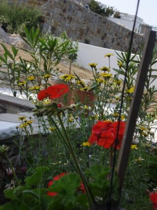 Notre Maison à Naxos  Dsc01612