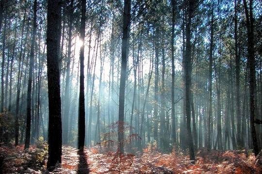 [RP] Souvenirs : la forêt des Landes Foretd10