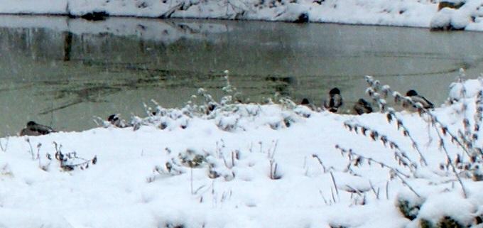 neige Sophie12