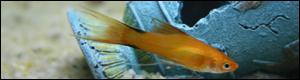 Bourse Aquariophilie  Gond Pontouvre 18 mars Signat10