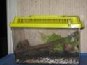 Observation des escargots 00910