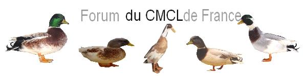 club  canard mignon,coureur et labrador