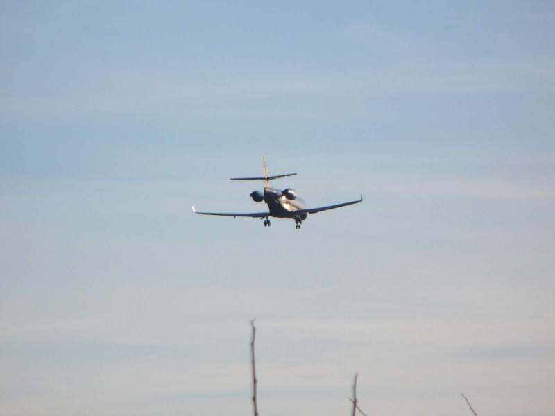 Avioane business Yr-tig11