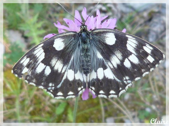 Je suis allée à la chasse aux papillons. Demi-d12