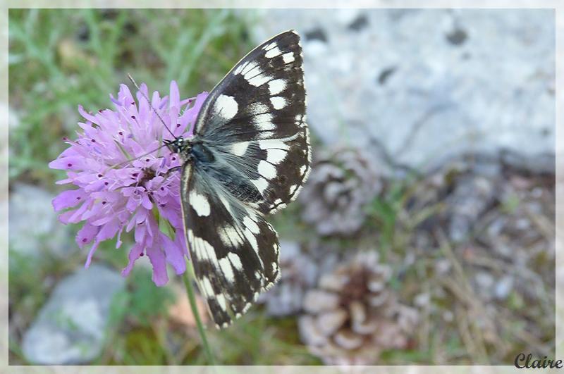 Je suis allée à la chasse aux papillons. Demi-d13