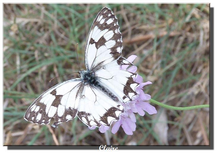 Je suis allée à la chasse aux papillons. Echiqu10