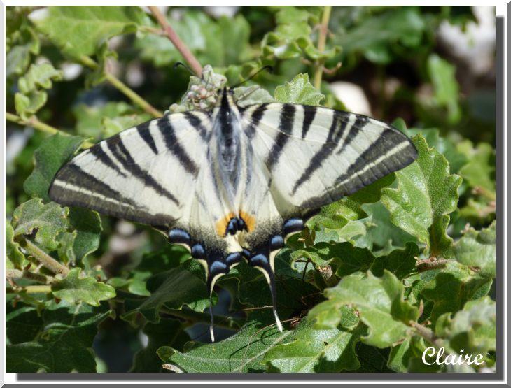 Je suis allée à la chasse aux papillons. Flamba12