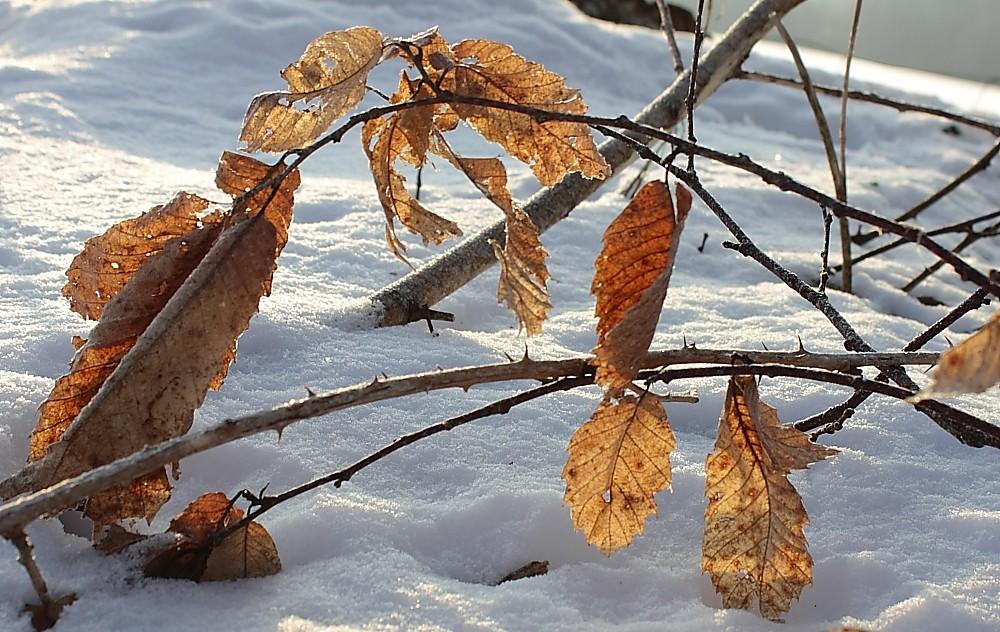 feuilles dorées Img14210