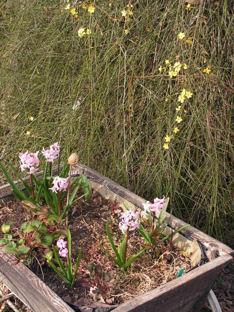 Le jardin de Marie Pict0014