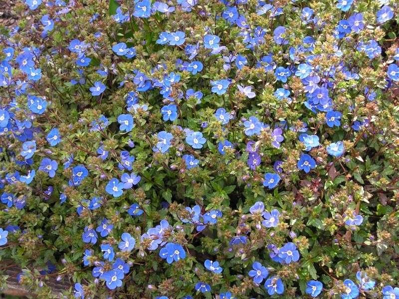 Le jardin de Marie Pict0015