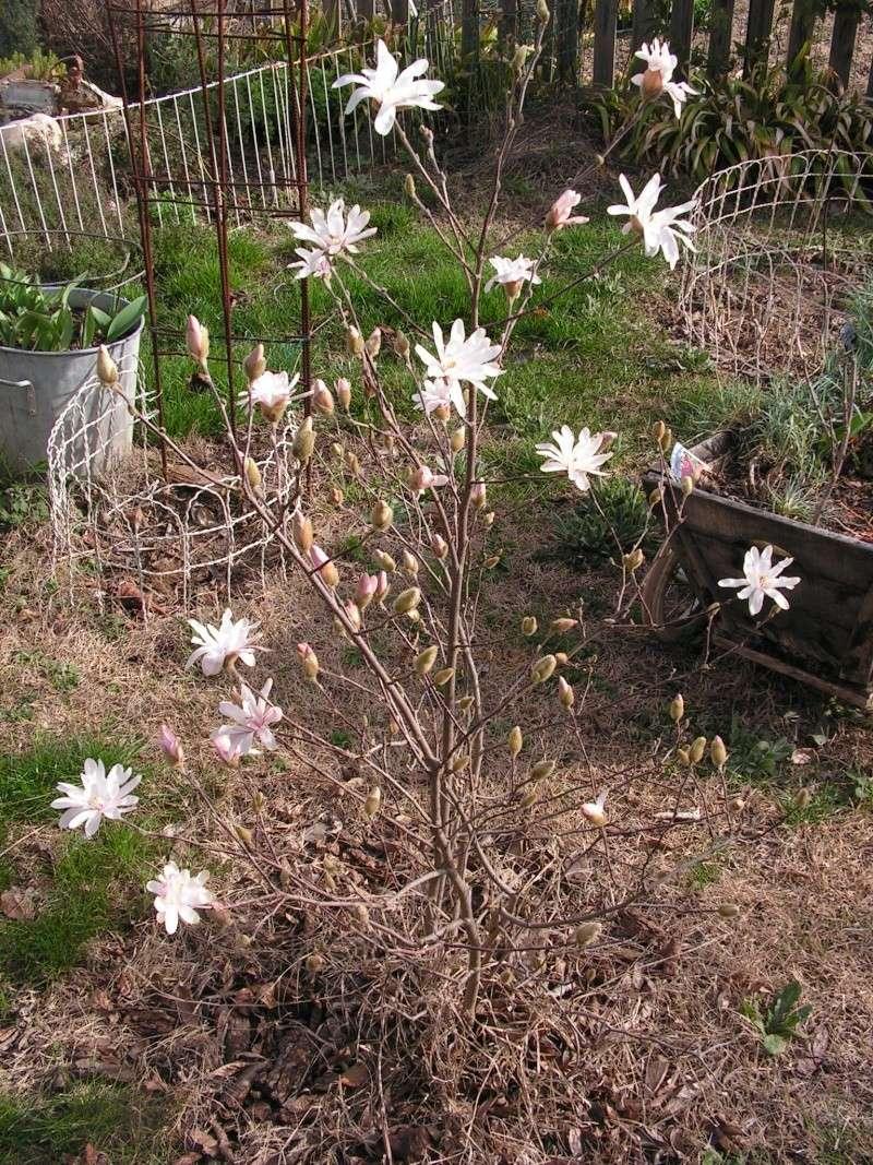 Le jardin de Marie Pict0022