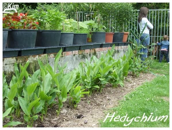 Visite d'un jardin privé. Hedych10