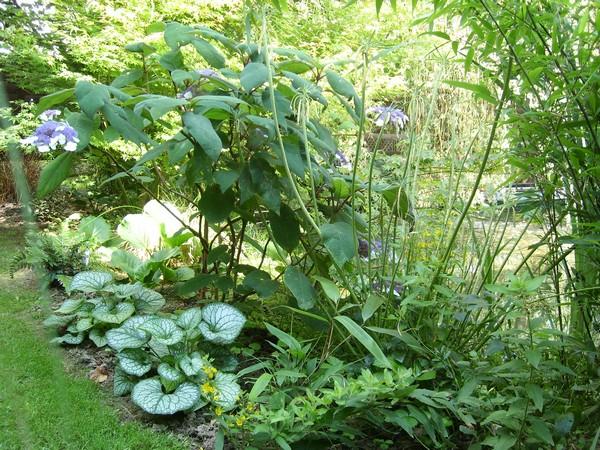 Visite de mon jardin Jardin18