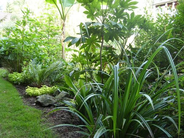 Visite de mon jardin Jardin19