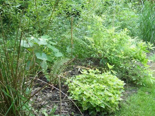 Visite de mon jardin Jardin20