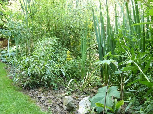 Visite de mon jardin Jardin21