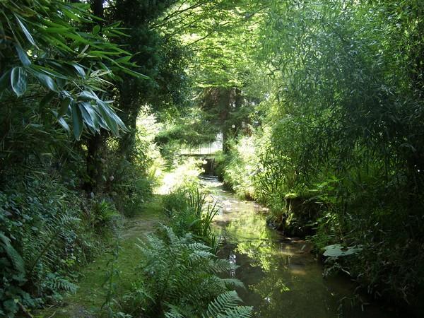 Visite de mon jardin Jardin23