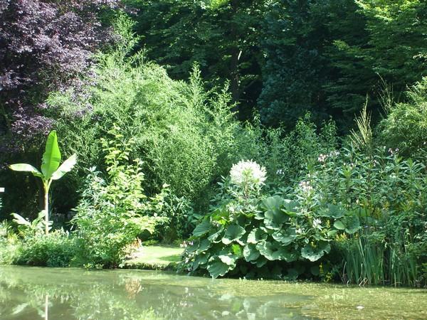 Visite de mon jardin Jardin26