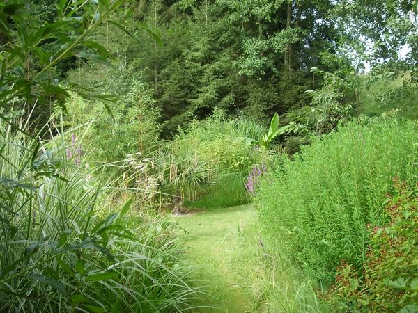 Visite de mon jardin Jardin31
