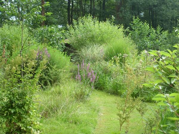 Visite de mon jardin Jardin33