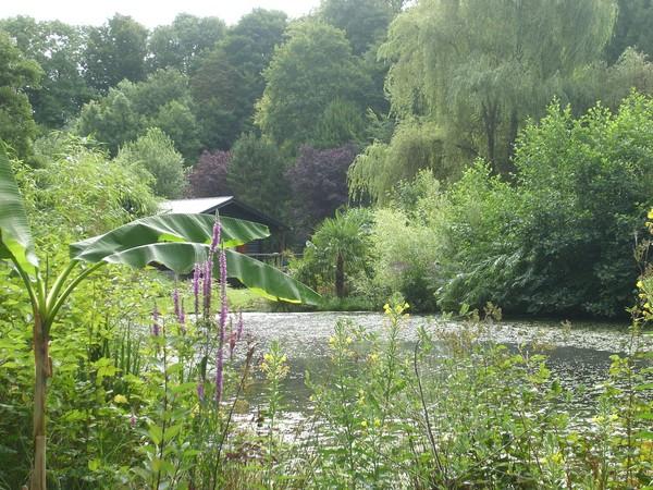Visite de mon jardin Jardin34
