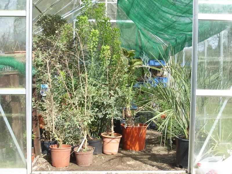 Serre de jardin Sl273515