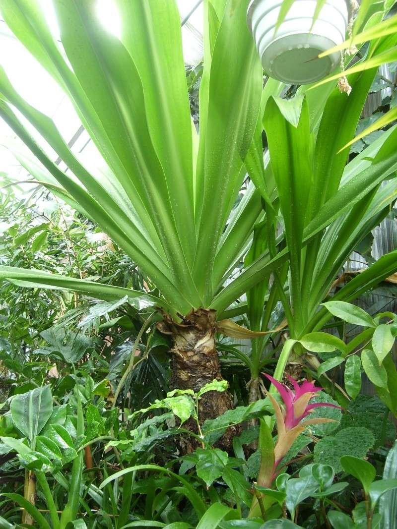 Connaissez-vous cette plante? Sl273615