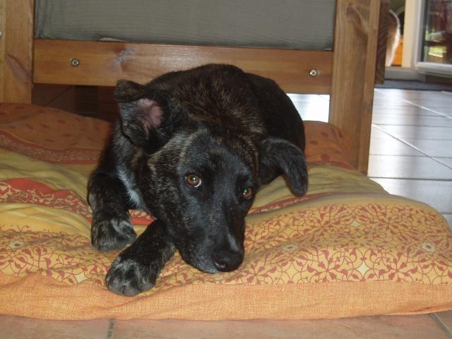 L'histoire de Dora : endormie dans un fossé P9241610