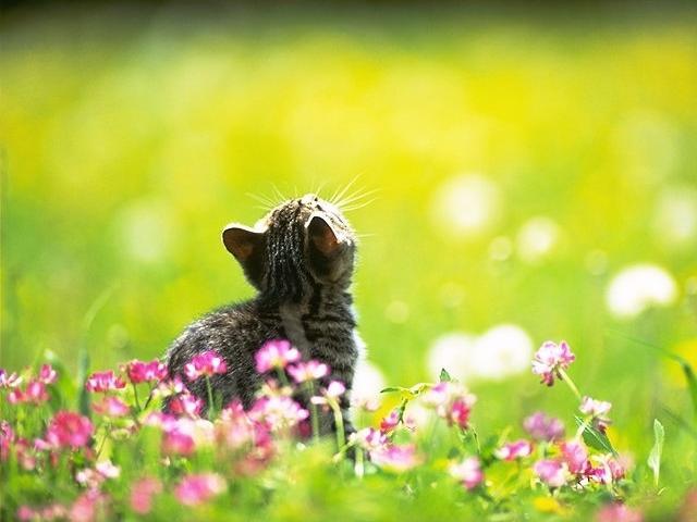 Беседка - Страница 2 Kitty10