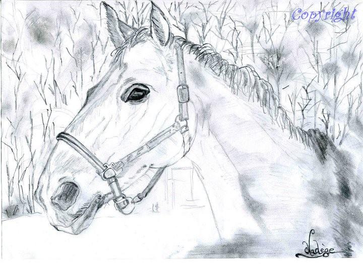 Mes dessins au fusain  30405110