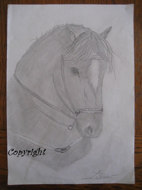 Mes dessins au fusain  Cheval10