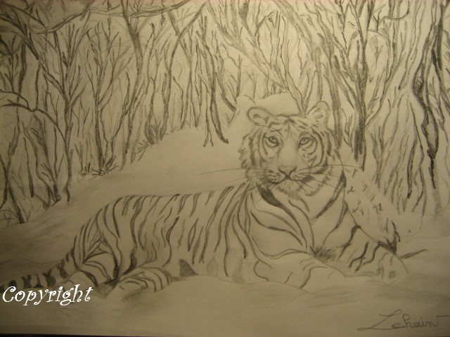 Mes dessins au fusain  Tigre_10
