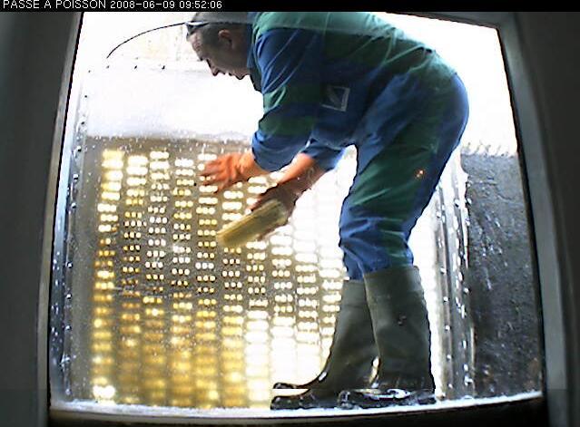 Passe à poisson du marais pin - Page 4 Du_gro10