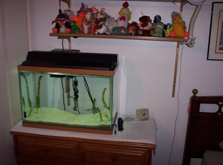 Lets see your tanks! 100_3315