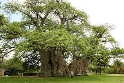 ماذا تتوقعون داخل هذه الشجرة؟؟ 42286_10