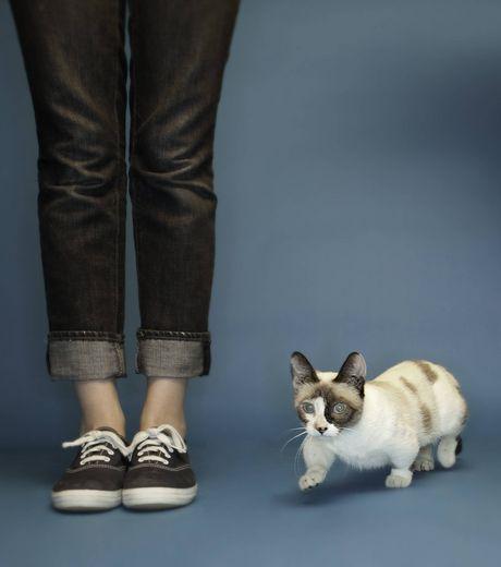 Le plus petit chat du monde Ce-cha10