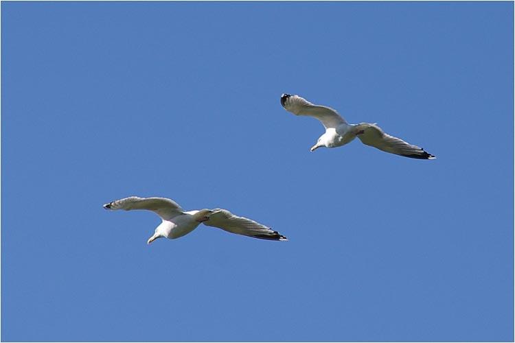 Animaux, oiseaux... etc. tout simplement ! - Page 6 Imgp3911