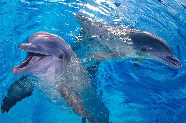 Дельфинарий лазаревское фото способ