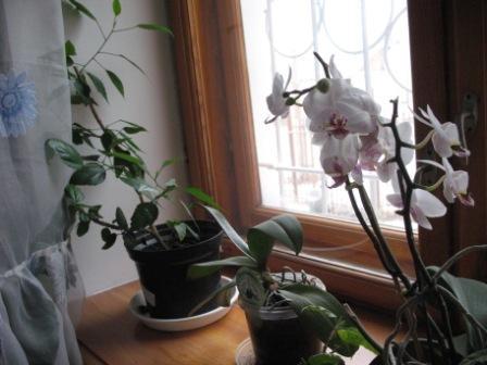 Разведение орхидей. 10521022