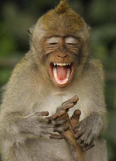 Monyet juga mempunyai fesyen rambut? 2012-011