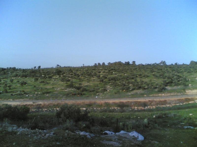 Green Faqoa Ameer310