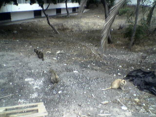 localizados unos gatitos Imagen10