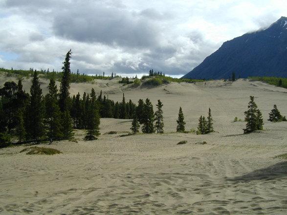 Le plus petit désert du monde, Carcross, Yukon, Canada Carcro11