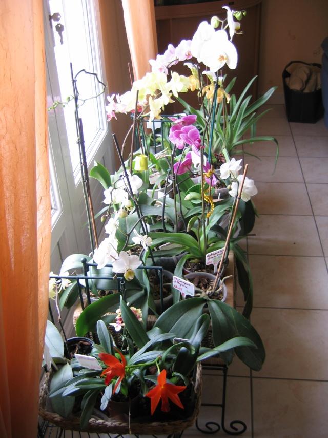 Orchidannie Fleur_10
