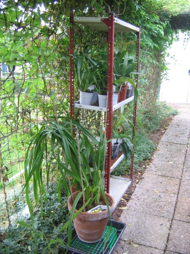 Orchidannie Jardin13