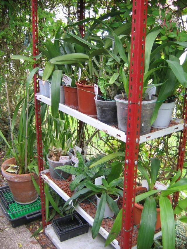 Orchidannie Jardin14