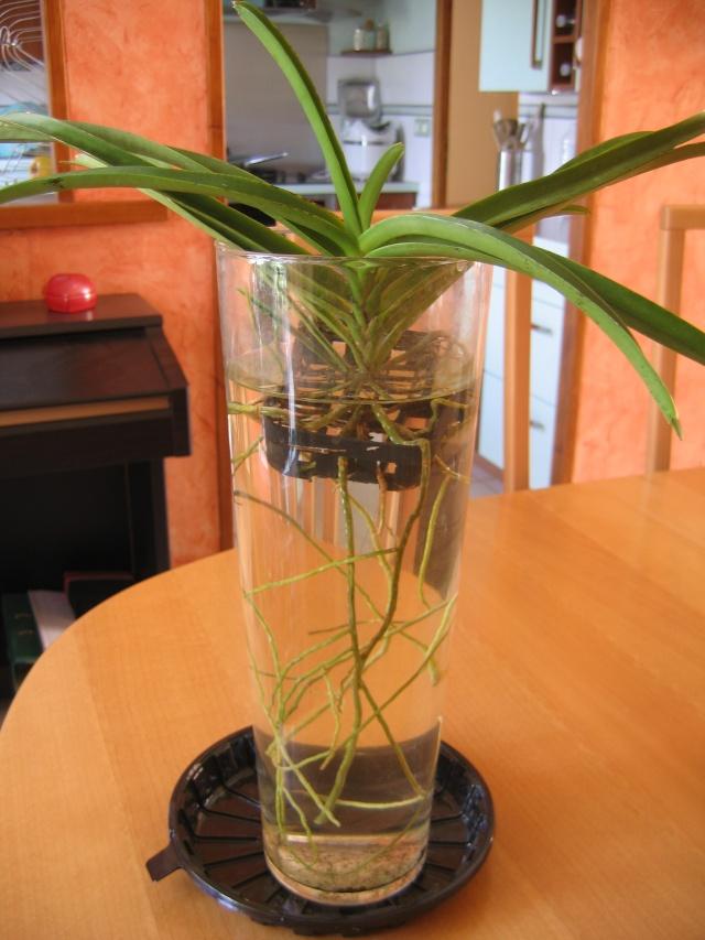 Orchidannie Plante10