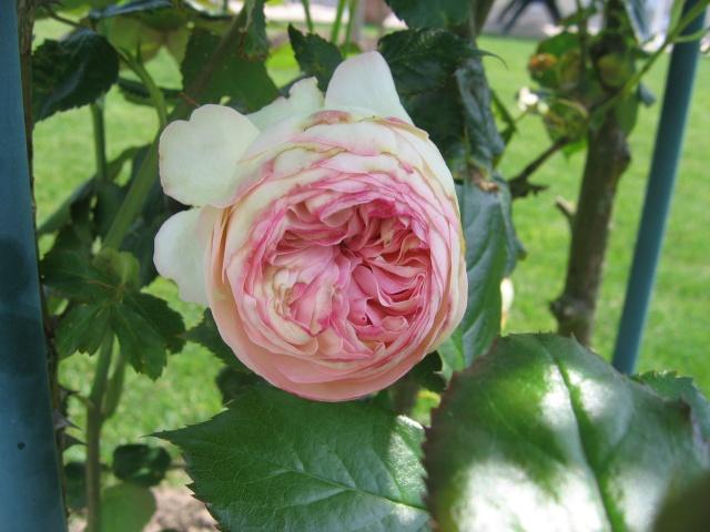 regardez mes belles fleurs Plante12